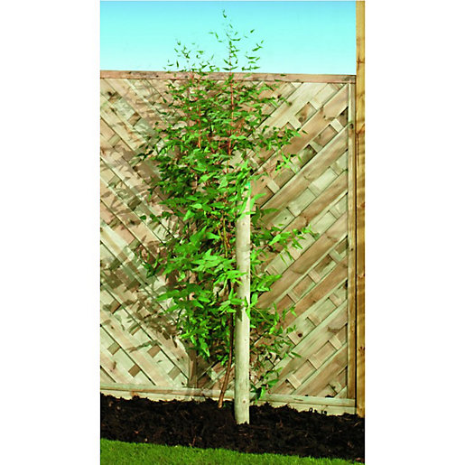 Wickes Timber Garden Tree Stake 50mm x 24m Wickescouk