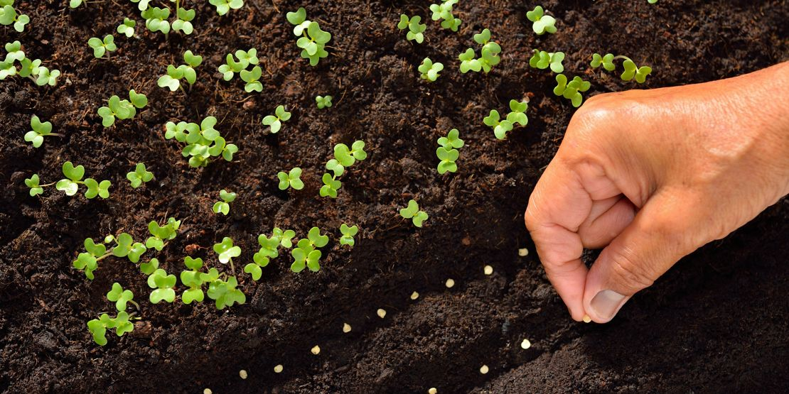 Sowing seeds for summer