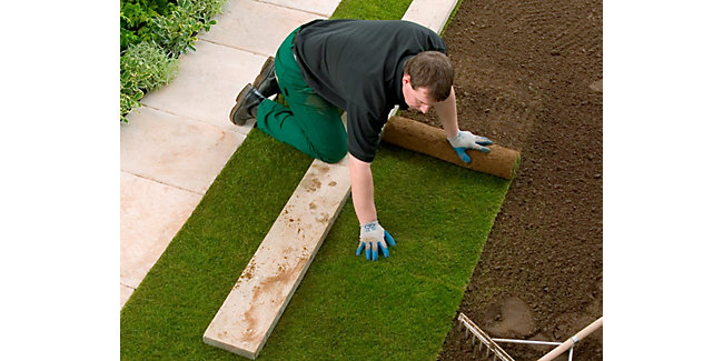 How to lay and maintain a turf