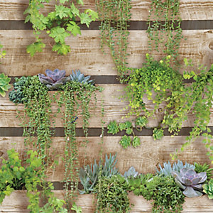 Superfresco Easy Palissa Vegetal Decorative Wallpaper - 10m
