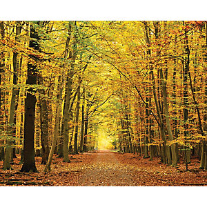 Image of ohpopsi Autumn Forest Leaves Wall Mural Multi - 14.4m (L)