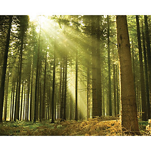 Image of Ohpopsi Evergreen Forest Tree Wall Mural Multi - 19.6m (XL)