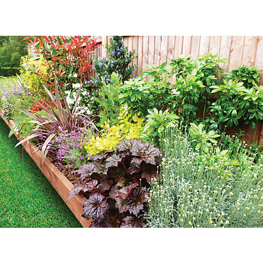 Garden On A Roll Mixed Sunny Border -