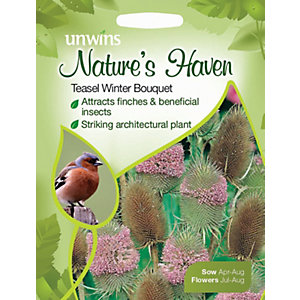 Unwins Natures Haven Teasel Winter Bouquet Seeds