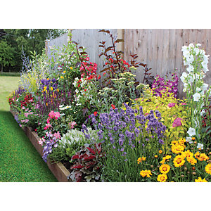 Garden On A Roll Wildlife Border - W600mm x 3m to 10m