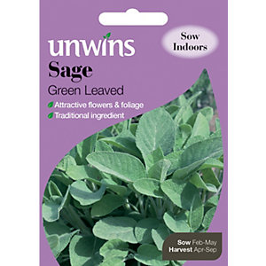 Unwins Green Leaved Sage Seeds