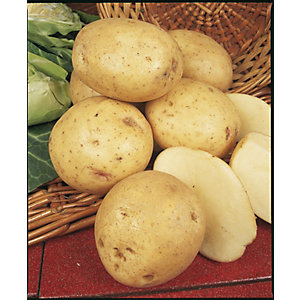 Unwins Maris Peer Seed Potatoes - 2kg