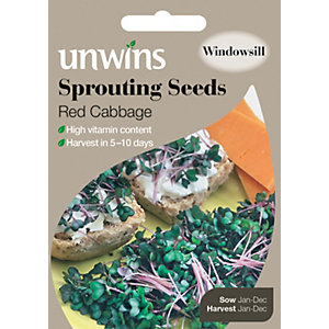 Unwins Sprouting Red Cabbage Seeds